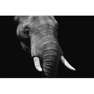 Wandkraft  Éléphant de la vie sauvage 148 x98