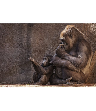 Wandkraft  WILD LIFE GORILLA WALL DECORATION