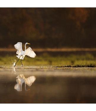 Wandkraft  Glasschilderij kraanvogel rising sun