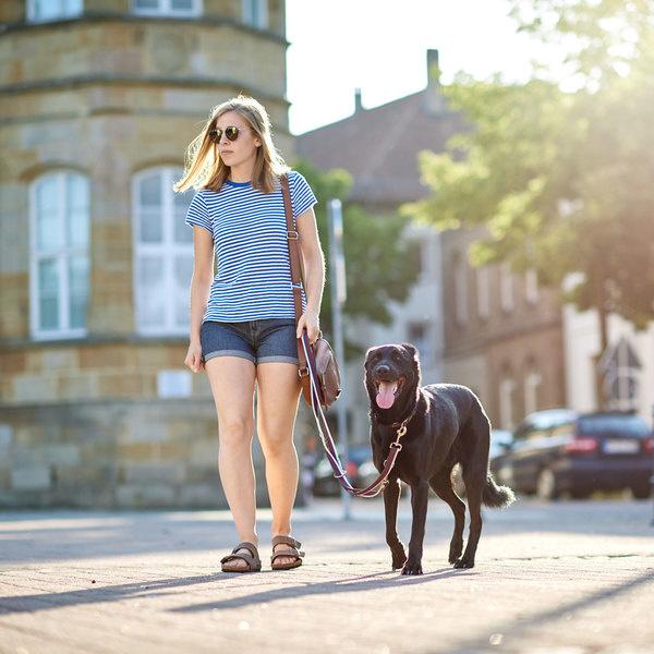 Hond aan de leiband leren lopen