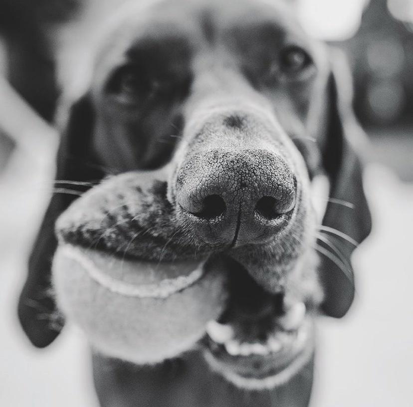 Hoe de gebitsverzorging van je hond aanpakken?