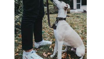 Tips voor het aanleren van commando's uw hond