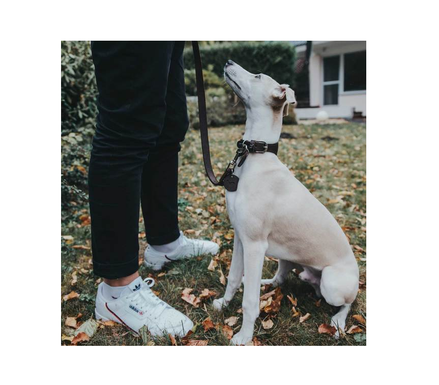 Tips voor het aanleren van commando's bij je hond