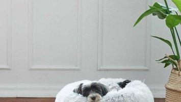 Hoe leer je uw hond alleen thuis blijven?