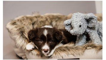 Tips voor het zindelijk maken van je puppy
