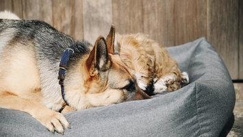 Hoeveel slaap heeft je hond nodig?