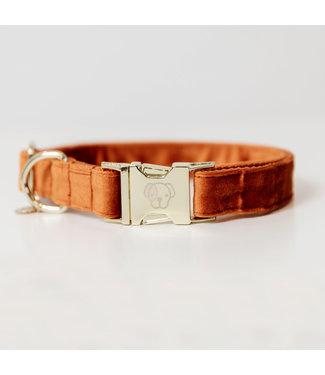 Kentucky Dogwear Halsband Velvet - Oranje