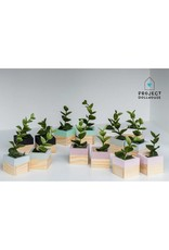 Project Dollhouse Modern Planter Set of 2