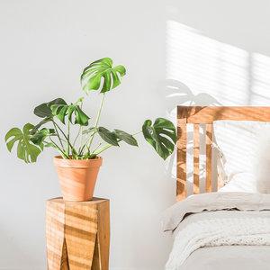 WoonQ-Gatenplant 'Monstera Deliciosa'-aanbieding