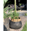 Van der Leeden Basket Bamboo Black - (D)34 x (H)24 cm
