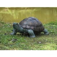 Beeld brons supergroot schildpad