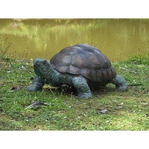 Eliassen Beeld brons supergroot schildpad