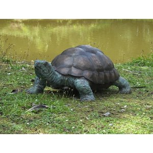 Eliassen Image bronze super-large turtle