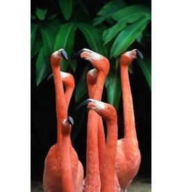 Wandkraft Painting dibond group Pelicans standing 118x70cm