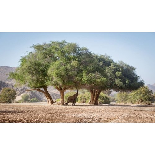 Acrylmalerei 80x120cm Afrika