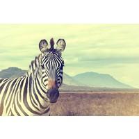 Glasmalerei Zebra Solo 80x120cm