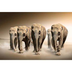 MondiArt Glasmalerei Elefanten Herde 80x120cm
