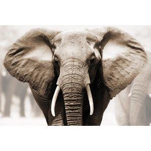 MondiArt Glass painting Elephant head 80x120cm
