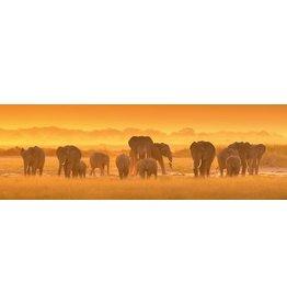 MondiArt Glasmalerei Gruppe von Elefanten 50x150cm