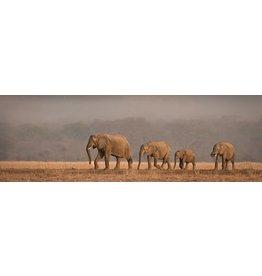 MondiArt Glass painting rectangular Elephants 50x150cm