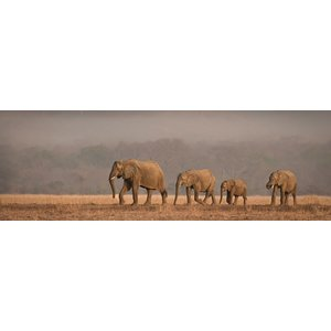 MondiArt Glasmalerei rechteckige Elefanten 50x150cm