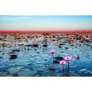 Ter Halle Glasschilderij Waterlelies 80x120cm