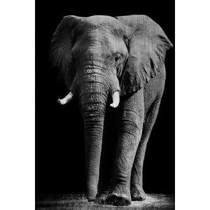 MondiArt Dibond painting Elephant large