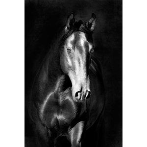 MondiArt Dibond schilderij Paard1