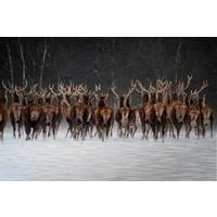 Aluminum painting Deer