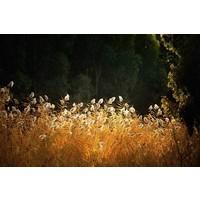Dibond schilderij Licht 148x98cm
