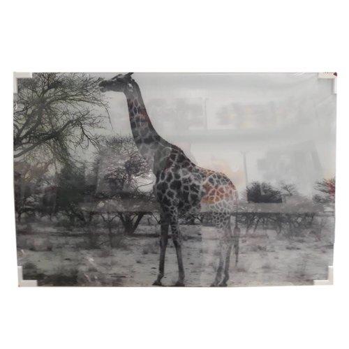MondiArt Glasschilderij Giraffe  80x120cm