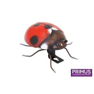 lieveheersbeestje klein