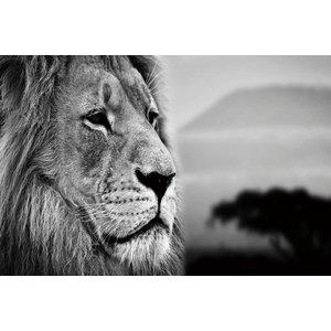 Eliassen Glass painting 80x120cm Lion