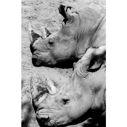 Eliassen Foto auf Glasmalerei 80x120cm Rhino