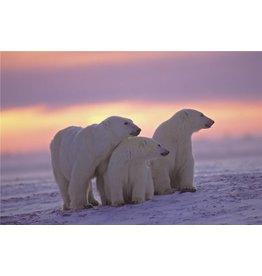 Eliassen Glass painting 80x120cm Polar bears