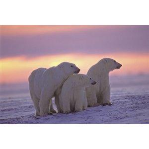 Eliassen Glasmalerei 80x120cm Eisbären
