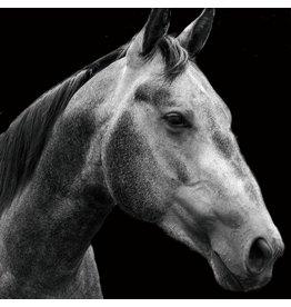 Glas schilderij 80x80cm Paard