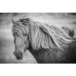 Gemälde Glas 60x90cm Pony