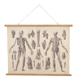 Eliassen Wandkaart Anatomie  100x75cm