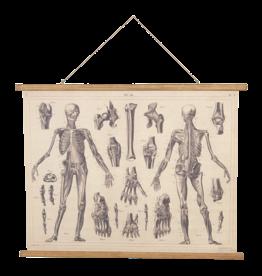 Eliassen Wandkarte Anatomie 100x75cm