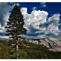 Wandkunst Glasmalerei Yosemite 74x74cm