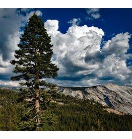 Wandkraft Wandkraft glasschilderij  Yosemite 74x74cm