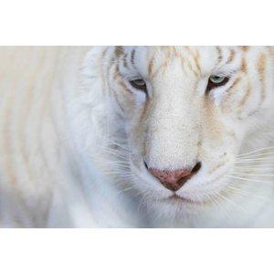 Wandkraft Wandkraft Glasmalerei Animal 148x98cm