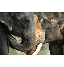 Wandkraft Glasmalerei 2 Elefanten 148x98cm