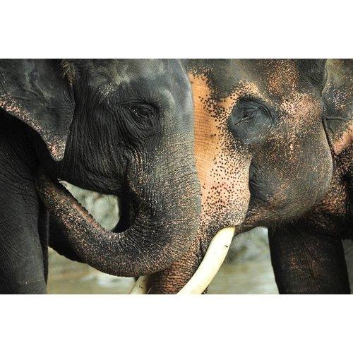 Wandkraft Glass painting 2 Elephants 148x98cm