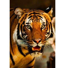 Wandkraft Glass painting Tiger close up 148x98cm