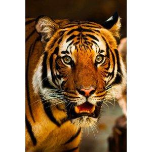 Wandkraft Glasmalerei Tiger close up 148x98cm