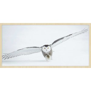 Wandkraft Painting forex Owl 48x98cm