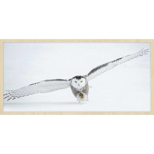Wandkraft Malen forex Owl 48x98cm