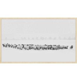 Wandkraft Anstrich Forex Flock 118x70cm